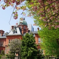 花と赤れんが庁舎