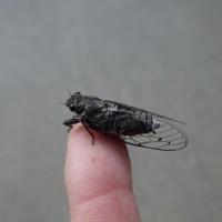手乗り昆虫 20170613