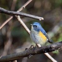 「幸せ」を運ぶ・・・「青い鳥」
