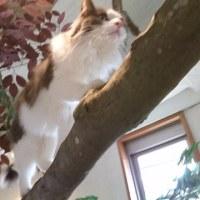 ノルウェーの森‼猫カフェへ。