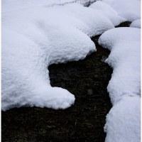 マキノの雪景色