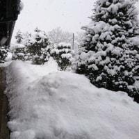 美山雪の情報 1月23日(月)午後4時