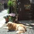 companion dog LOVE