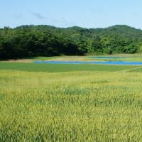 「美しい日本」