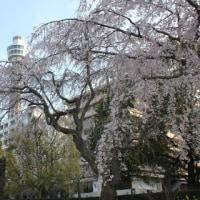 6月4日まで 全国都市緑化よこはまフェア 花と洋館1