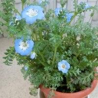 花が咲き始めました(3)