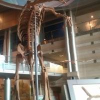 神奈川県立 生命の星 地球博物館