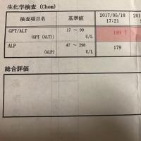 高値だったGPT/ALT…再検査の結果は??