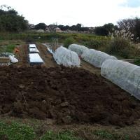 畑の片づけと掘り起こし。
