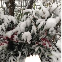2018年1月15日(雪)今年初の大雪