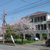 No.2743 桜ももう終わり