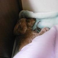 ココの寝姿パート2