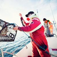ロブスター漁規則を点検   スエーデン