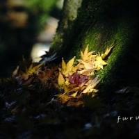 秋の若狭路