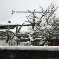 京都は大雪~カメラマンは金閣・銀閣へ!!
