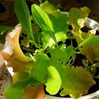 ツタの紅葉とベランダの鉢物