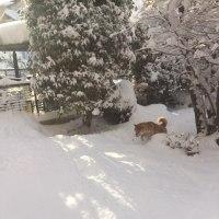 雪、ゆき、ユキ