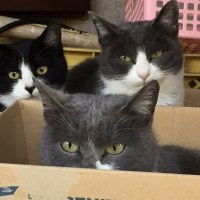 猫が増えていた。
