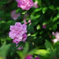美しき庭の花々