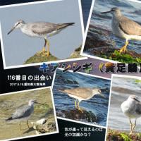旅先で出会った野鳥たち
