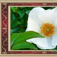 今年も咲いてくれた都志川右岸の白花