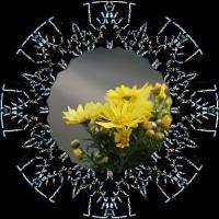 花回廊の花、続きを・・・