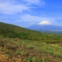 新緑の山中湖と富士山