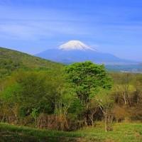 新緑の美しい山中湖と富士山