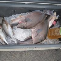柏島釣り情報