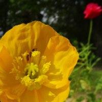 いろんな花が・・・鶴見緑地 5月17日版