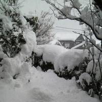 寒波も通り過ぎて~❄~*