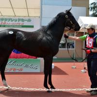 JRA競走に勝ったセール出身馬紹介(2017/1/21-22、ナックビーナスなど24頭)