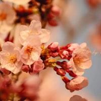 愛里跨の12星座monthly占い(4/21~5/21)
