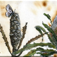 Banksia with butterflies
