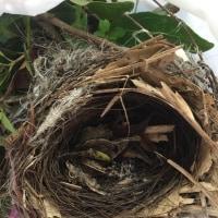 何の巣❓何だろう