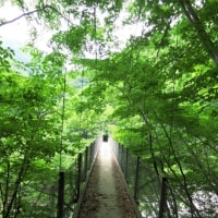 2016.6 碧と緑の西沢渓谷
