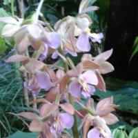 気晴らしに庭の花の写真です