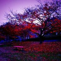 午前中、将棋番組をね→雨の中、地元の公園を歩いただけ