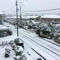 11月の雪~