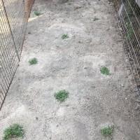 グリーン絨毯計画!!