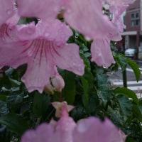<雨上がりの朝。。。>