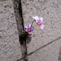 けなげな花