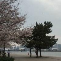 お花見がてら新橋北庄さん
