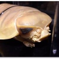 【写真日記】新江ノ島水族館@神奈川県藤沢市片瀬海岸