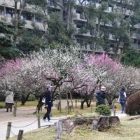 ぶらり散策~縮景園・梅 その5