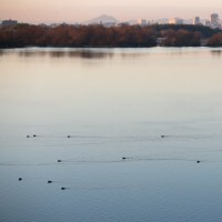 水鳥泳ぐ川