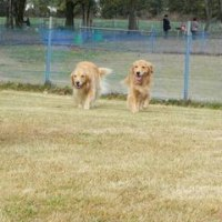 We went to the dog run !