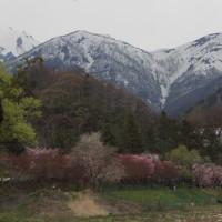 水上 諏訪峡の桜2017