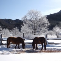 17年1/18~開田高原~霧氷~③