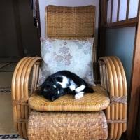 ネコのお気に入り 籐椅子